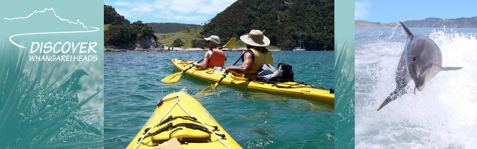 kayak whangarei harbor