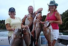 big snapper fishing Whangarei Heads