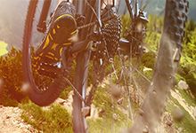 Adventure park bikes Whangarei Heads